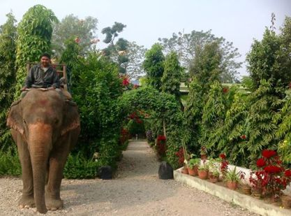 Elephant at Hotel Rhino Land Chitwan, Nepal